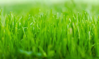 Lawn Service in Boston MA Lawn Care in Boston MA Lawn Mowing in Boston MA Lawn Professionals in Boston MA