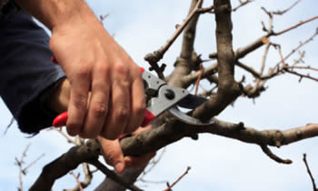 Tree Pruning in Boston MA Tree Pruning Services in Boston MA Quality Tree Pruning in Boston MA