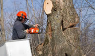 Tree Removal in Boston MA